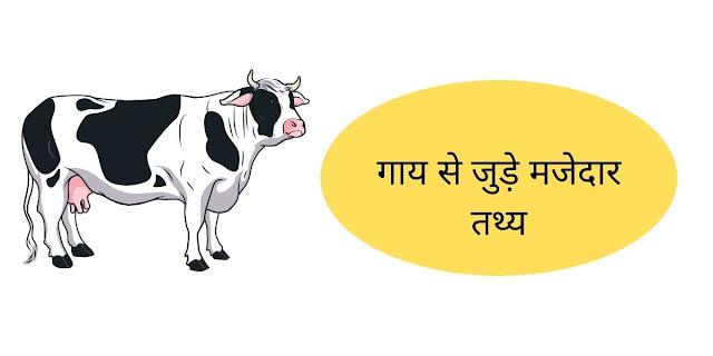 गाय से जुड़े मजेदार तथ्य