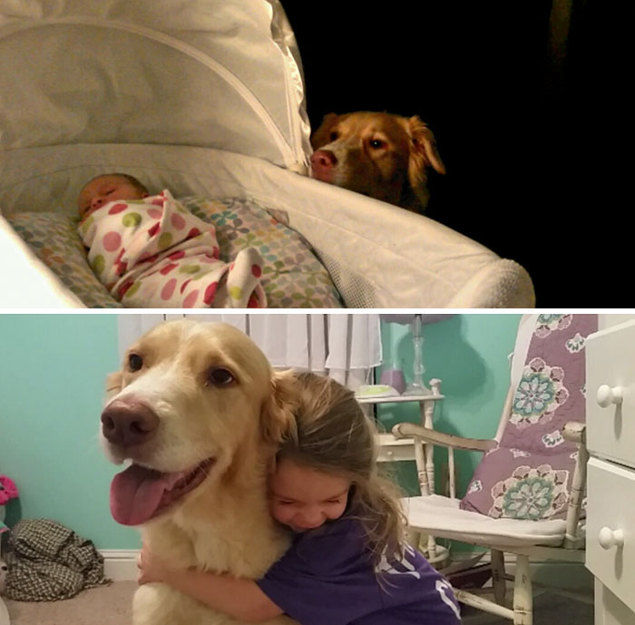 30 Heart-Warming Photos Of Dogs Growing Up Together With Their Owners - 3 Years Of Friendship