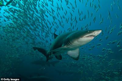 Chilling moment a shark stalks an unsuspecting swimmer off Bondi Beach