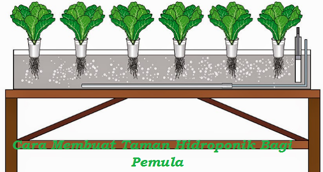 Cara Membuat Taman Hidroponik Bagi Pemula, Mulai Sistem Hidroponik, Cara Bertanam Hidroponik, Media Tanam Hidroponik Dan Jenis-Jenis Tanaman Hidroponik