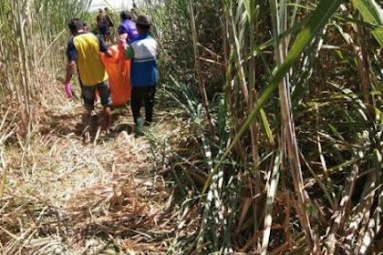 Mayat Pria Telanjang Di Sidoarjo Ditemukan Membusuk Di Kebun Tebu