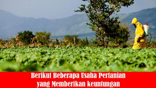 Berikut Beberapa Usaha Pertanian yang Memberikan keuntungan