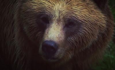 सपने में भालू को देखने का क्या मतलब होता है?