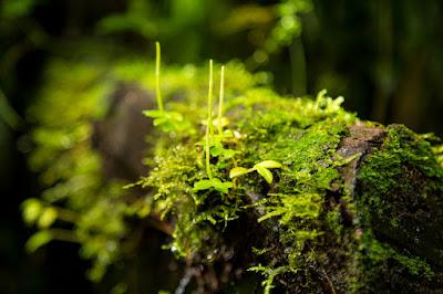 pertanyaan tentang tumbuhan lumut