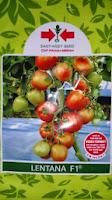 jenis tomat besar, tonat hibrida, lentena f1, cap panah merah, manfaat tomat, masker tomat, jual benih tomat, toko pertanian, toko online, lmga agro