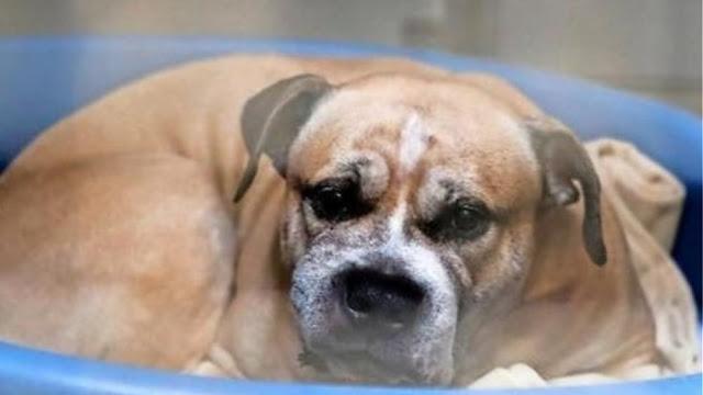 250.000 Γερμανοί ζήτησαν να μην θανατωθεί σκύλος που κατασπάραξε τα αφεντικά του
