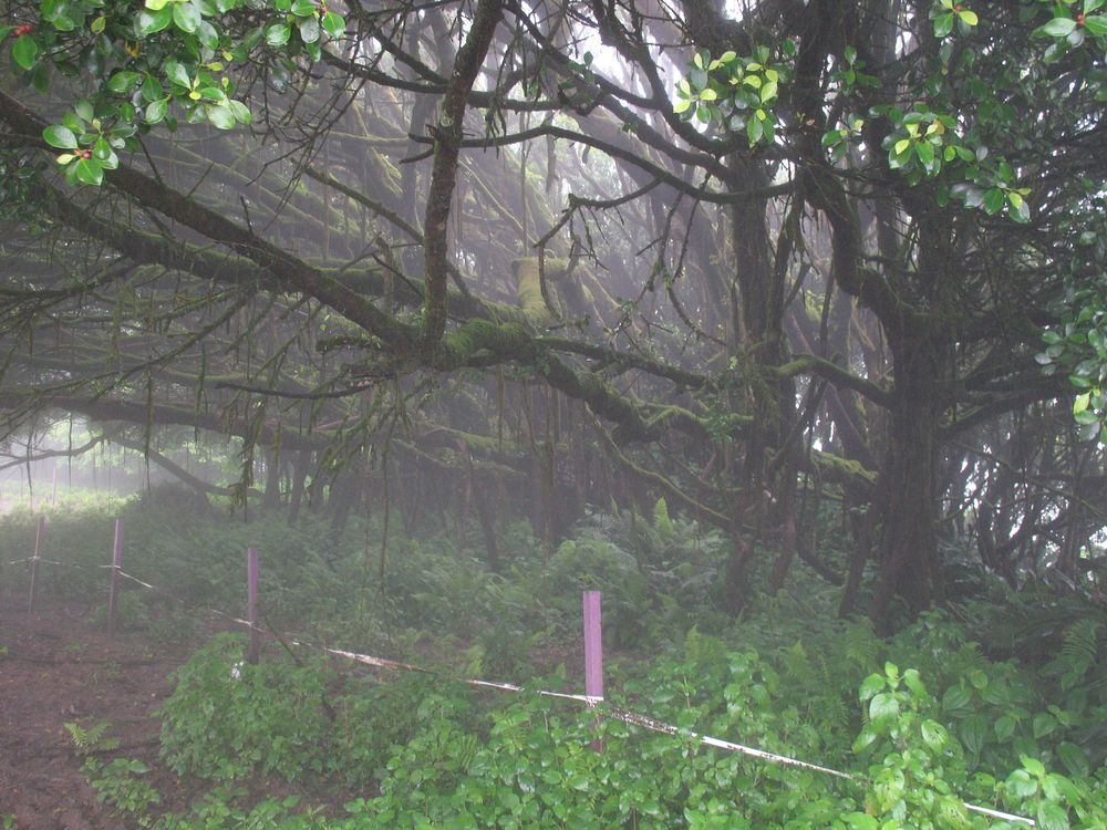 Mist covered forest on Ascension Island.