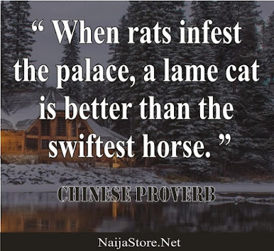 Chinese Proverb: When rats infest the palace, a lame cat is better than the swiftest horse - Quotes