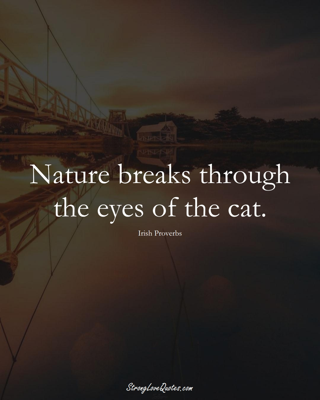 Nature breaks through the eyes of the cat. (Irish Sayings);  #EuropeanSayings