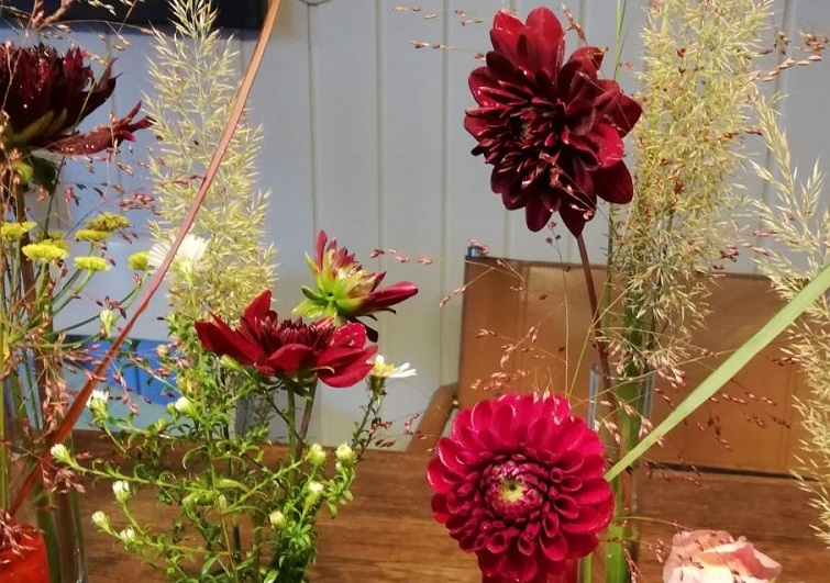 Dahlien Garteblumen zum Dekorieren