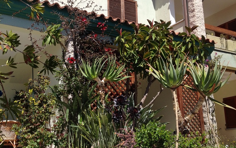 Pflanzen des Südens
