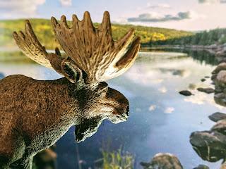 Moose Spirit At Freshwater Bay