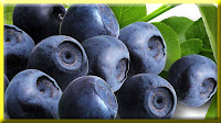 gambar buah blueberry, bahasa arab buah blueberry