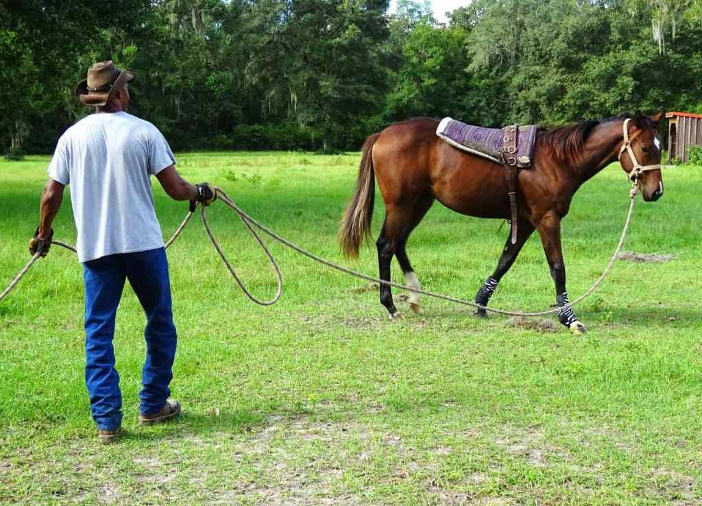 What to Look for in a Horse Trainer: 4 Key Factors to Consider