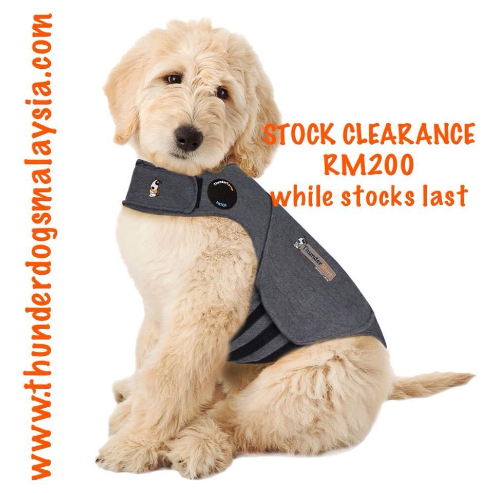 Thundershirt For Dogs Sizing Chart Azərbaycan Dillər Universiteti