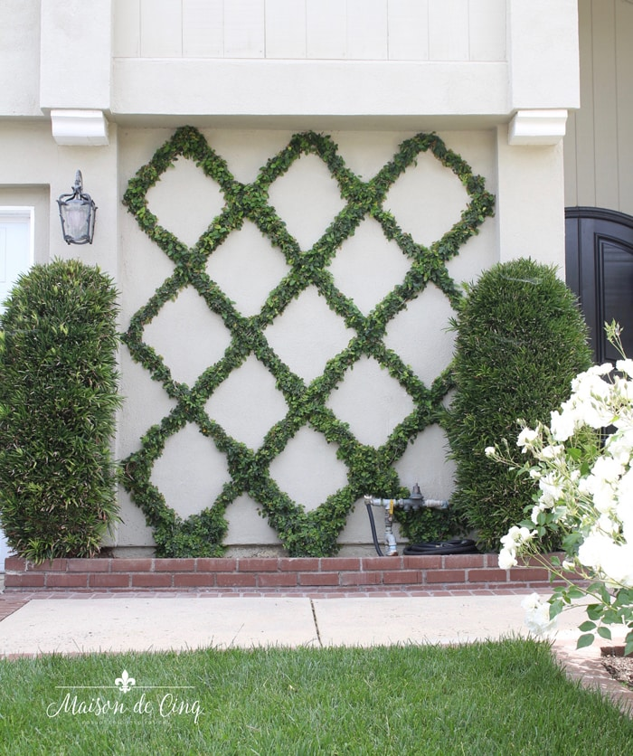 How to grow diamond vine patter on house or fence