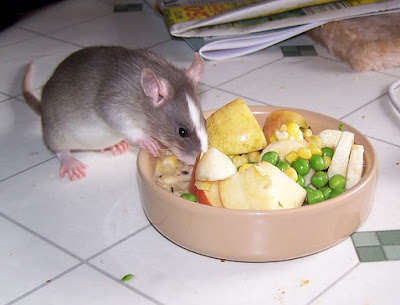 vegetables and fruits recommended for rat