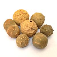 Obat Herbal Sembuhkan Kehamilan Ektopik (Hamil Diluar Kandungan)