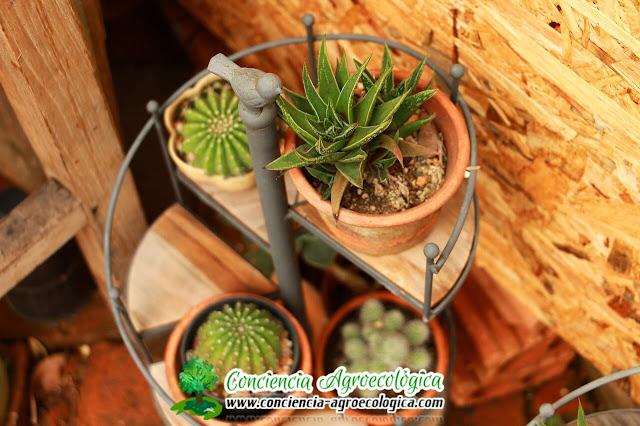 jardin con cactus en macetas