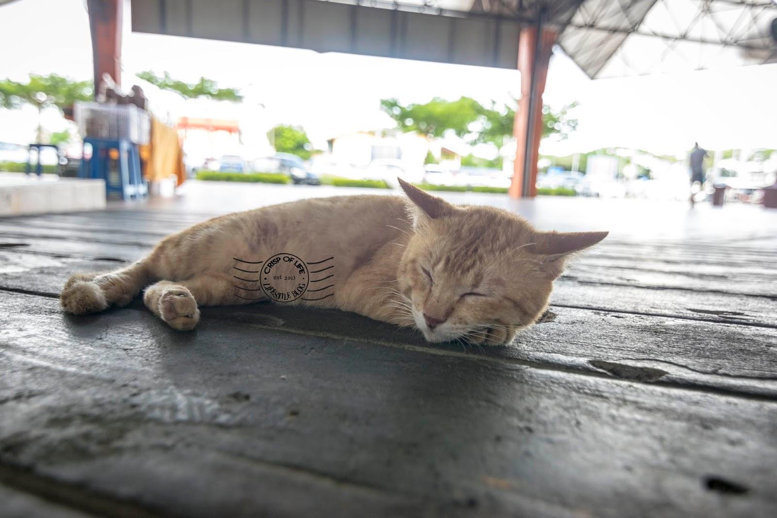 Satok Weekend Market - The Unique Excursion Into Local Market @ Kuching, Sarawak