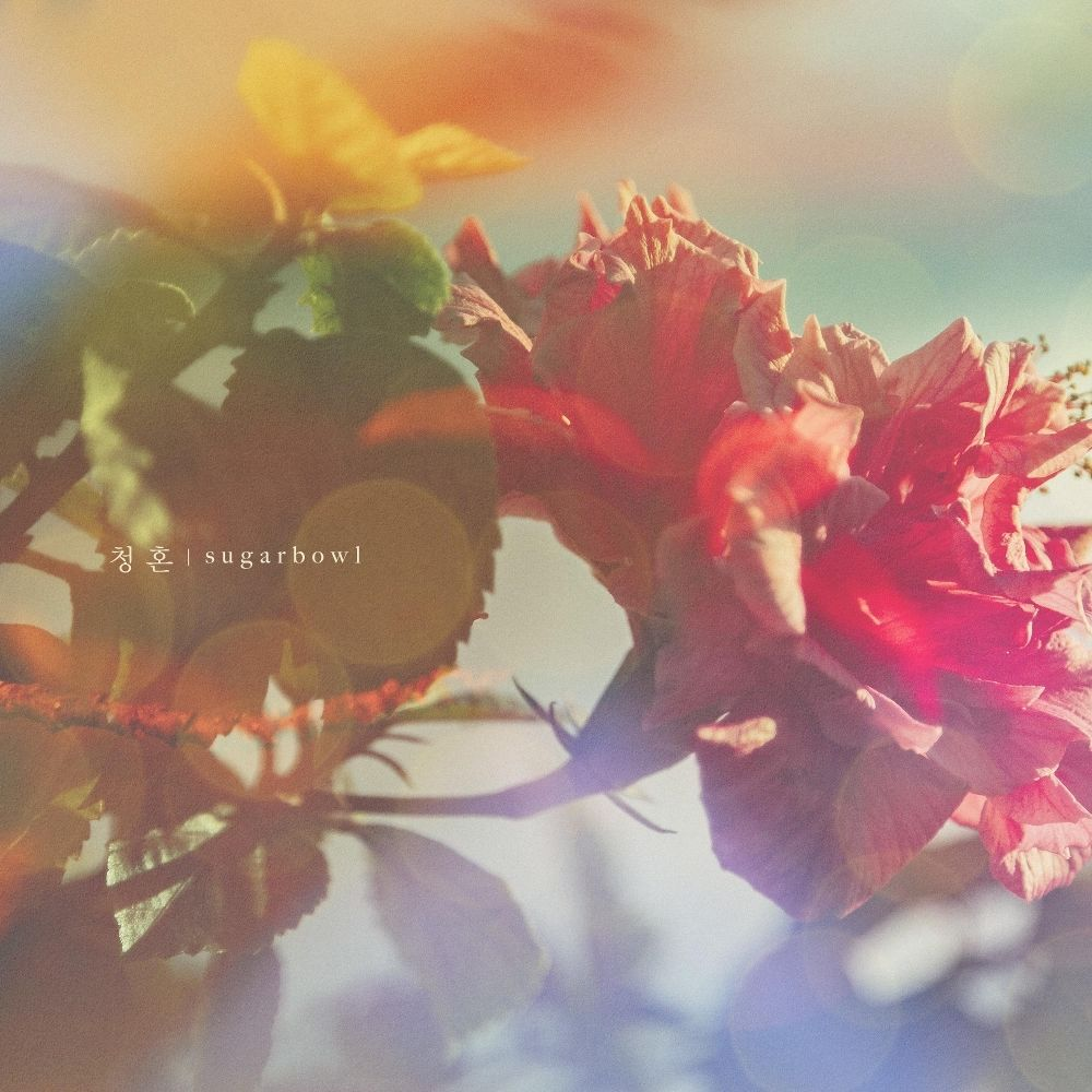 Sugarbowl – lovers 3/6 – Single