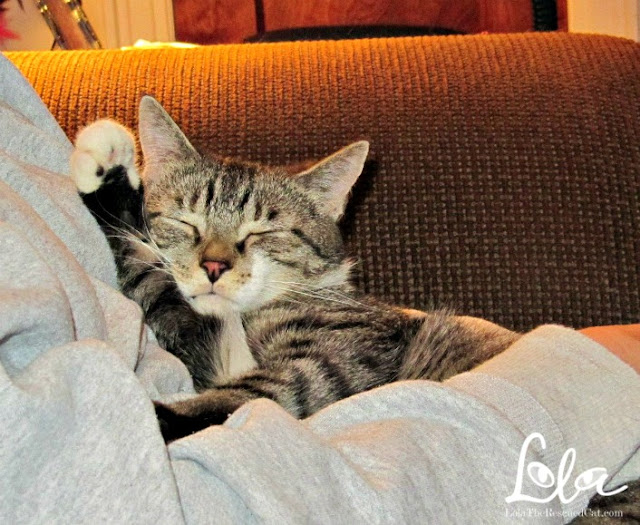 Lessons I learned from my rescued cat