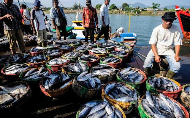 Daerah Penghasil Ikan Terbesar di Indonesia
