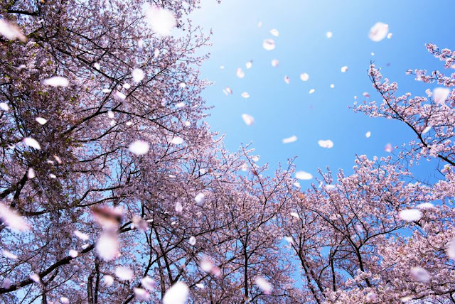 Nhật Bản - Nơi tâm hồn an yên