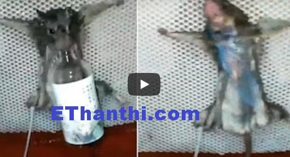 திருடிய எலிக்கு கிடைத்த குரூர தண்டனை | Cruel punishment for the stolen mouse !
