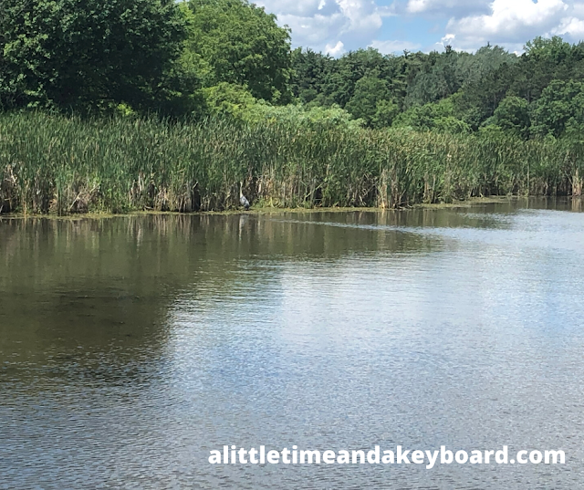 A Great Blue Heron stands among the wetland grasses at McDonald Woods.