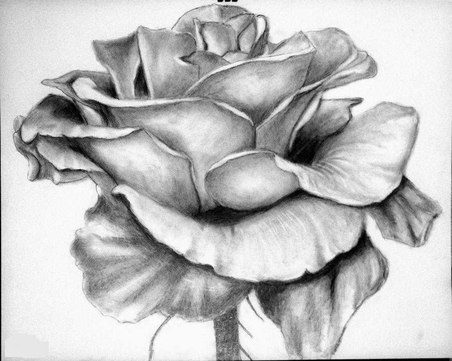 Top 13 Flowers Sketches Beautiful Sketching Flowers