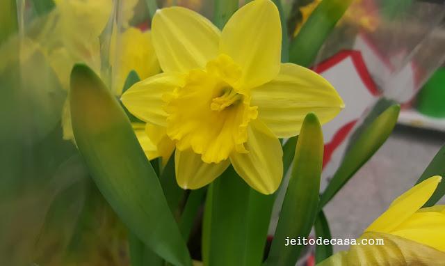Flor-de-narciso