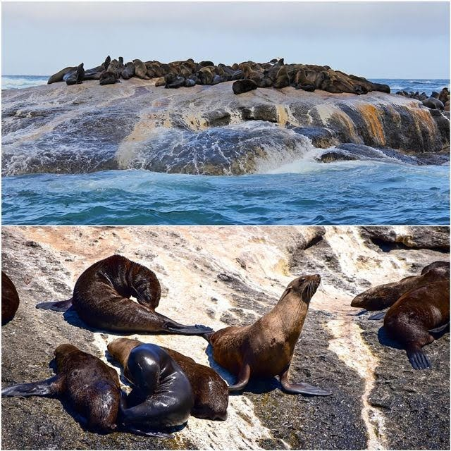 Seal-Island-False-Bay-Sudáfrica