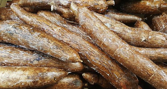10 Variasi Makanan Olahan dari Singkong