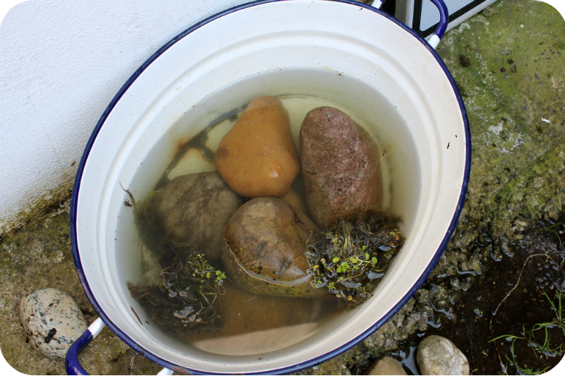Brunnenkresse in der Emaillewanne | Arthurs Tochter kocht von Astrid Paul