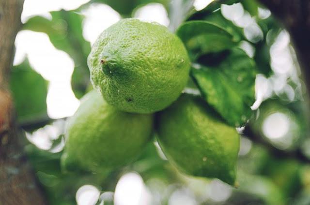 """""""buah lemon segar"""""""