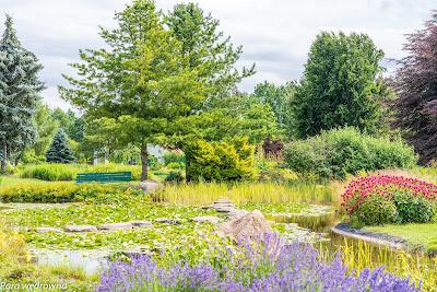 Powsin ogród botaniczny PAN krajobraz