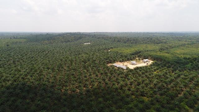 Lima Perusahaan Sawit Merambah Kawasan Hutan di Batanghari, Salah Satunya Milik Konglomerat