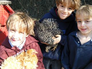 boys with backyard hens