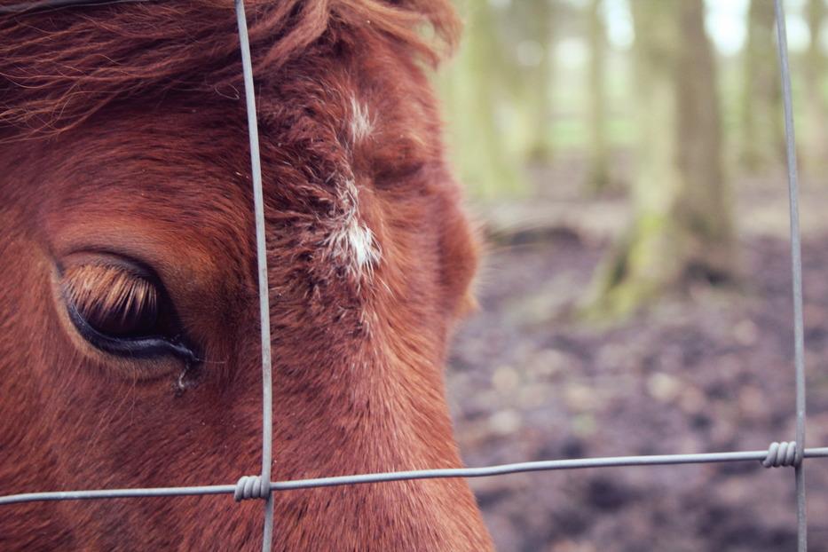 A Shetland Pony's Eye photograph