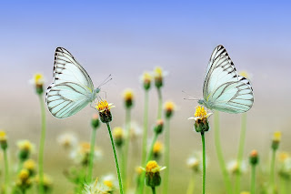 फूल का फैसला , hindi poem