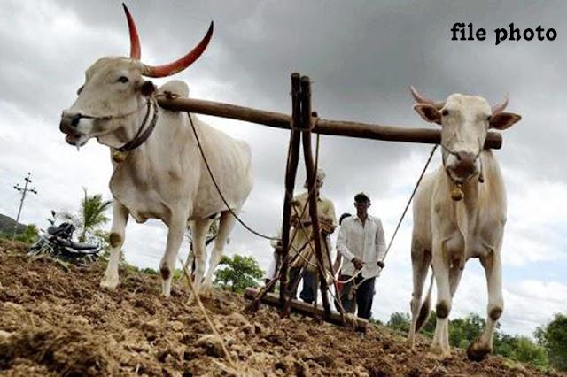 शेतकऱ्यांनी पुरेसा पाऊस झाल्याशिवाय पेरणी करु नये -NNL