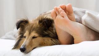 Por exemplo, e segundo o especialista, não deve deixar o seu cão dormindo na sua cama se sofrer de alergias