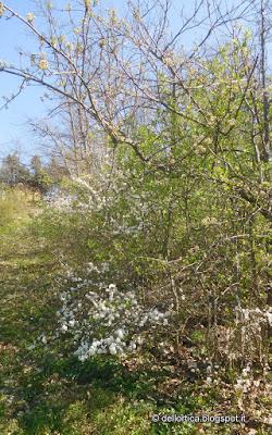 birdwatching escursioni erbe spontanee fauna selvatica erbe aromatiche dittamo frassinella ortica tarassaco rose