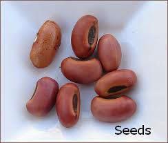 Erabadu Seeds
