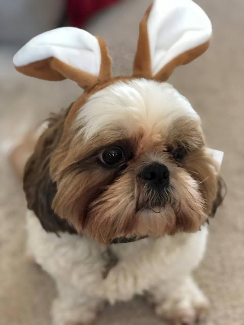 bear my dog with bunny ears
