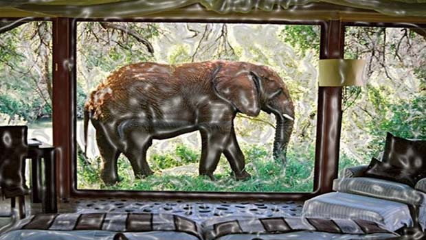 Makanyane Safari Lodge is for those who are fonder of elephants than giraffes. So, you will see the elephants in place of giraffes walking freely from your windows. This will be your exclusive chance to feel the presence of elephants so near to you.