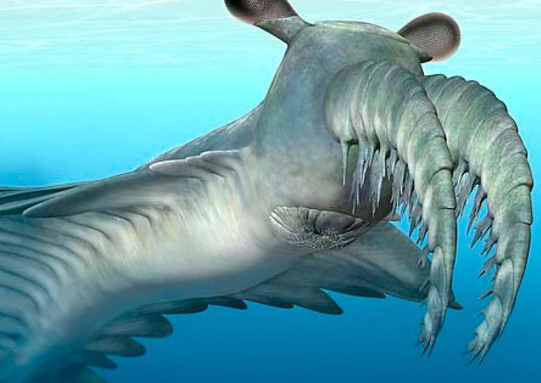 Radiodontes: as feras marinhas que desenvolveram a visão noturna na pré-história