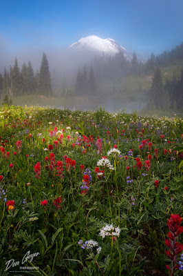 Flower meadows along the Naches Peak loop trail at Mount Rainier National Park, Cascade Range, Washington, USA.