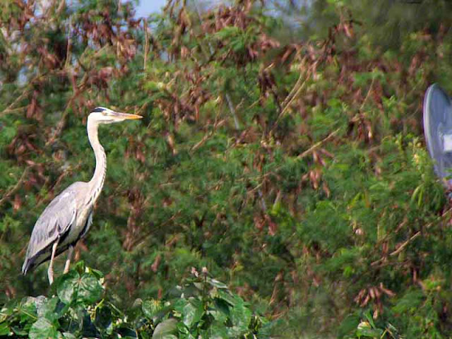bird watching traffic mirror